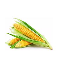 пченка